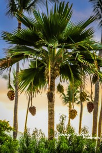 Maui Weddings Locations